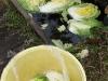 2007.12.05白菜漬け