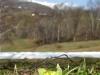 2009.04.18 残雪とフキノトウ