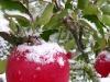 2009.11.03リンゴと雪
