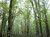 2006.05.28 新緑のブナの森