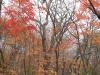 2006.11.02 ミズナラの森の紅葉