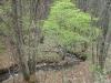 2007.05.07 太田川源流の広葉樹の森