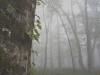 2005.10.15 霧に包まれるブナの森