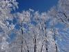 2002.02.01 尼が禿山霧氷の森