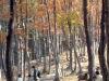 2005.11.28紅葉と羊の散歩