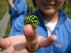 2009.09.08キアゲハの幼虫