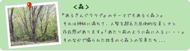 フォトアルバム<森>