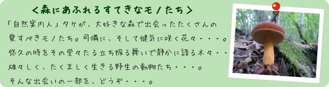 フォトアルバム【森にあふれるすてきなモノたち】