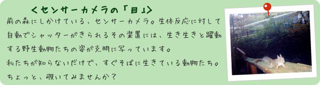 フォトアルバム<センサーカメラの「目」>